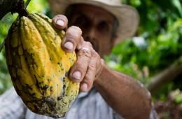 cocoa producer